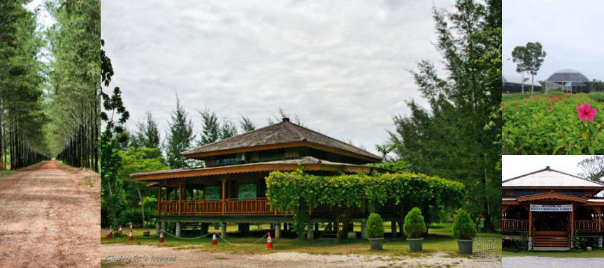 bangka-botanical-garden-intro